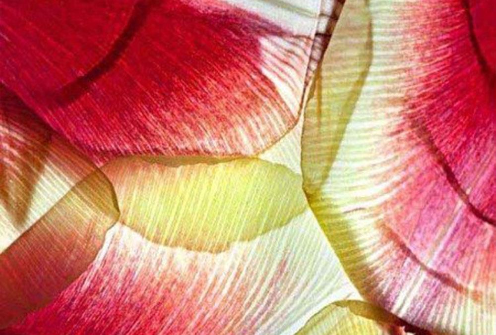 Petals-B1-450x450
